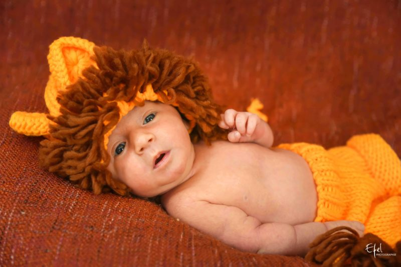 bébé lion photo studio gap 05