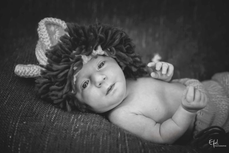 bébé lion photo studio hautes alpes