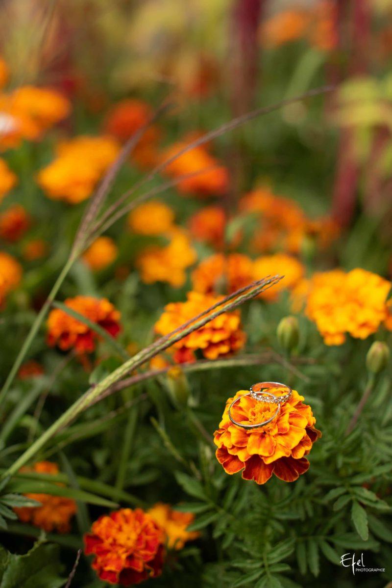 photo des alliances dans des fleurs